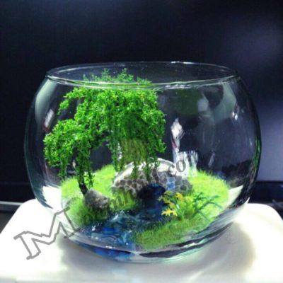 Mô hình trong chậu thủy tinh
