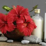 Hướng dẫn làm hoa dâm bụt bằng giấy siêu dễ thương
